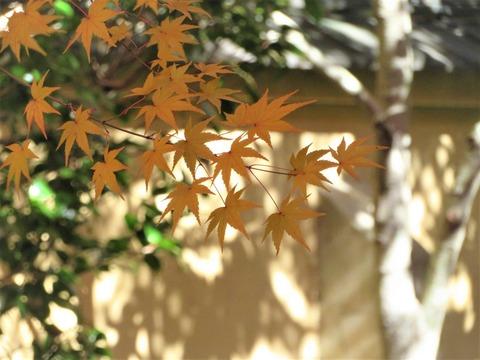 秋の風情 興臨院北庭