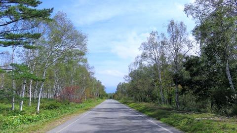8・白樺群生林をつらぬく林道