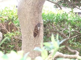 鳴かぬ蝉3