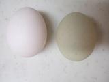 青い卵(南米チリ原産 アローカナ鶏)