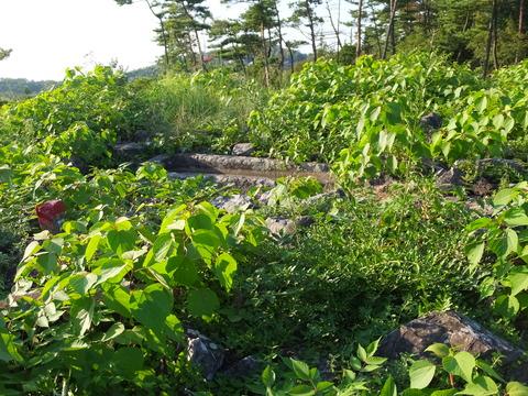 35・後円部頂には雑草が繁茂・刳抜式石棺が隠れる