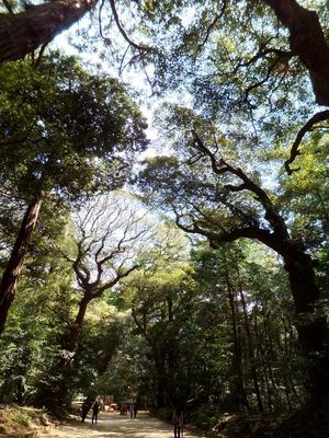 原生林の中を縫う参道
