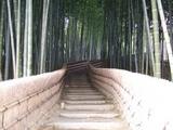 化野の竹林
