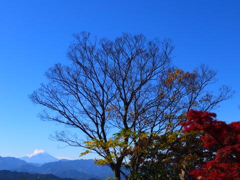 25・富士山と紅葉
