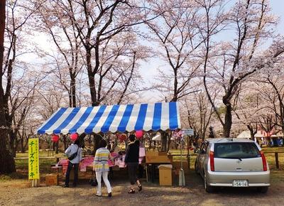 3・聖光寺桜まつりに出店の蓼科高原チーズケーキ工房