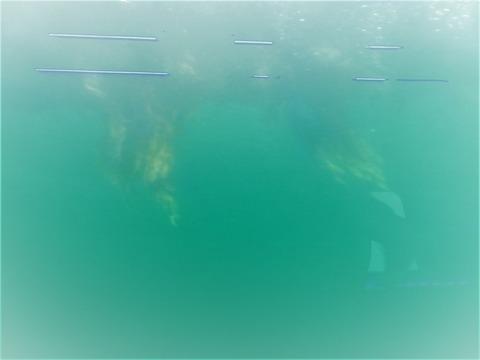 �海中から見た渦潮