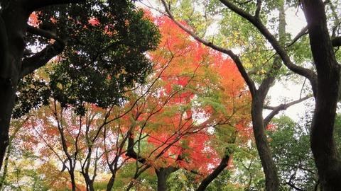 1 熱田神宮境内の紅葉