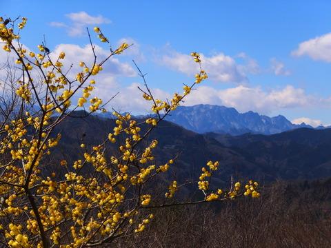 8・両神山と蝋梅