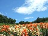 展望ゆり園から天空を望む