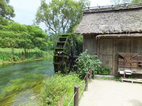 大王わさび園の水車小屋