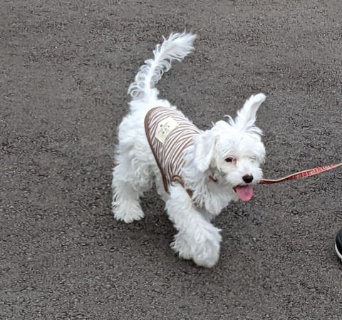 京都市内で犬の散歩ができる大型公園 3選