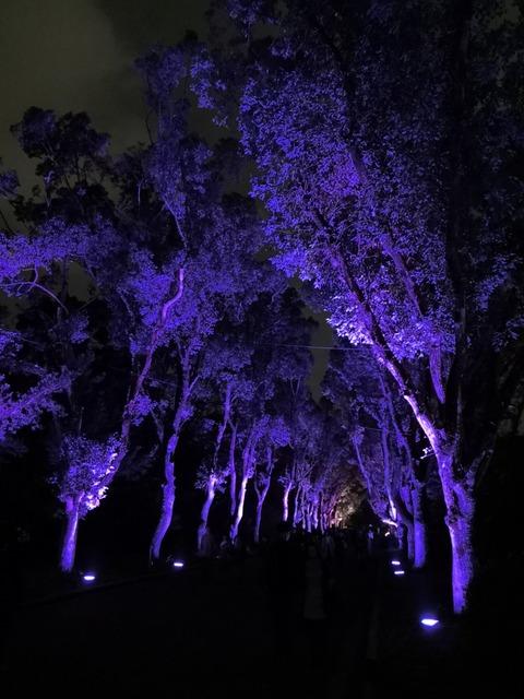 【2018】京都府立植物園イルミネーションと温室の夜間開室に行ってきた