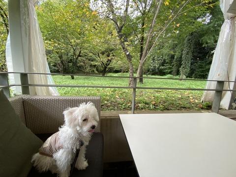 京都北山のイタリアン【インザグリーン】に植物園の景色を見ながら犬と一緒に食事ができるテラス席があった