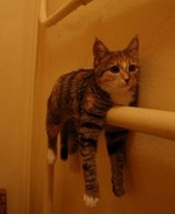 cat_on_the_railing_cute