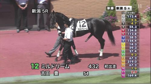 horses-penis2011