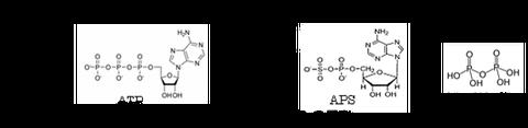 硫酸イオンとATP