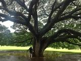 Hawaii_28 (640x478)