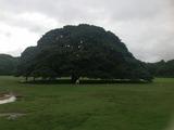 Hawaii_7 (640x478)