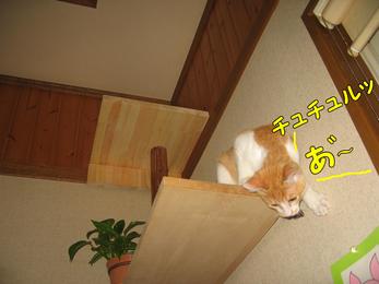 チュチュル あ゛〜!