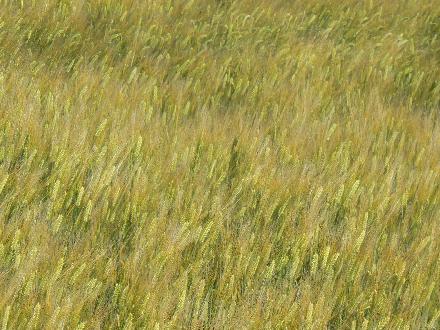 P1290863