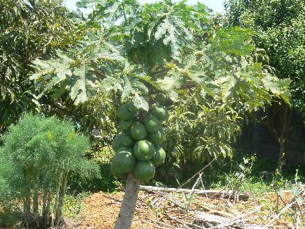 P1310573