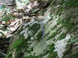 滑床渓谷2