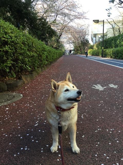 さくらと桜2018