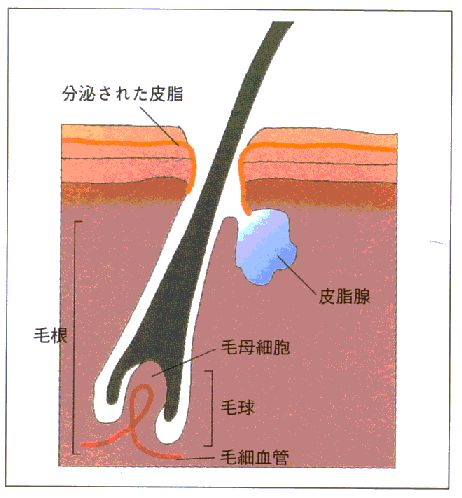 kaminokouzou2
