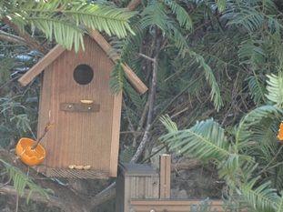 巣箱のペイント