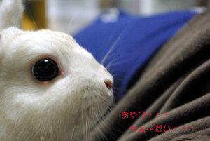 おねだりの瞳