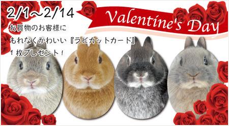 rabbitvarentain