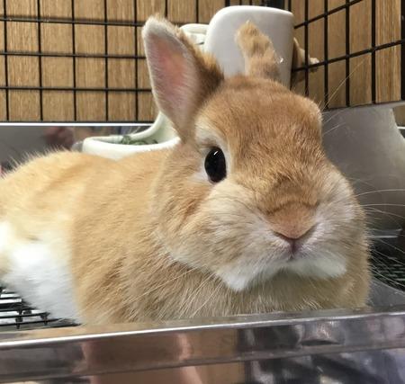 rabbittさん