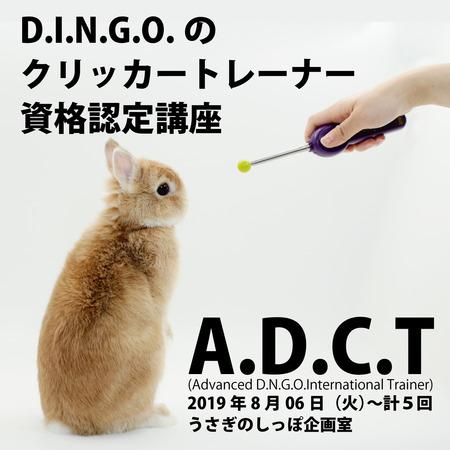 dingo2019-7-1