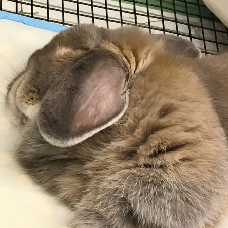 お昼寝inうさぎのしっぽ吉祥寺店