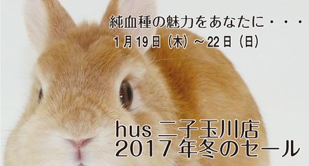 nikotama2017spring2