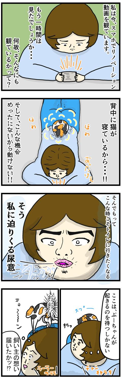 猫湯たんぽ1