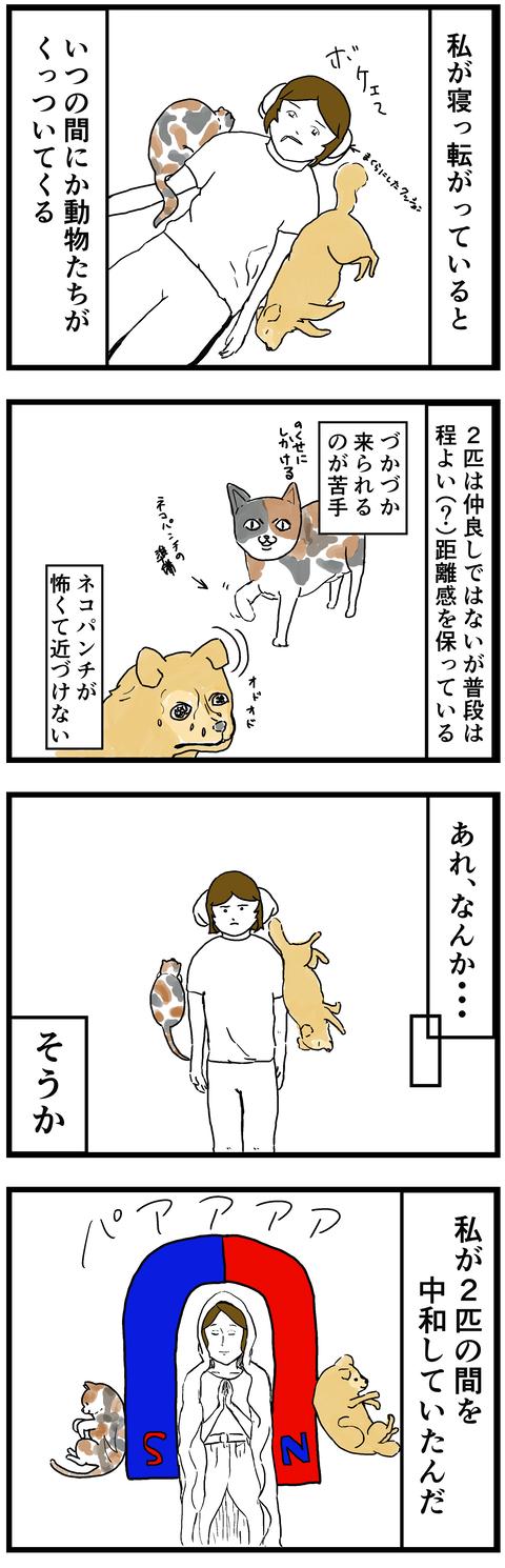 中和マリア.png1