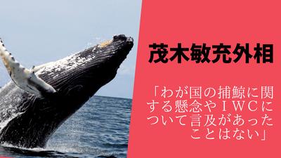 【国際理解浸透か】反捕鯨「日本がIWC脱退!無法者国家!国際的孤立!」→茂木外相「捕鯨に言及あったことない」