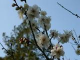 三鞍で感じる春3
