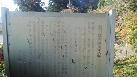 北山本門寺32杉