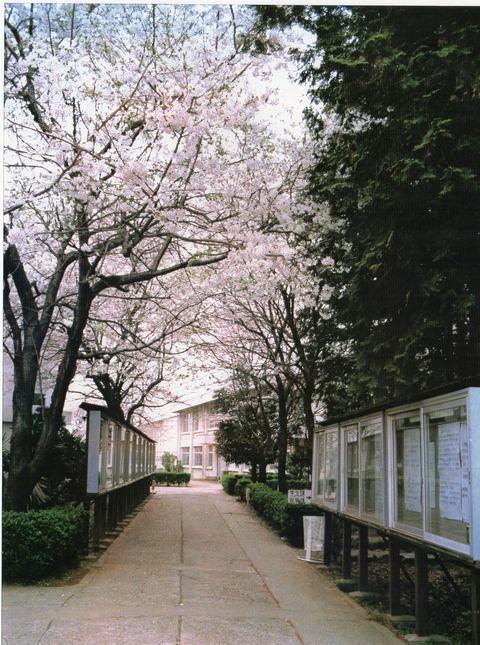 国際商科大学2