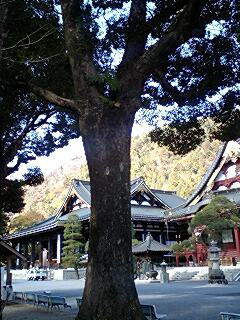 身延山久遠寺の楠木4