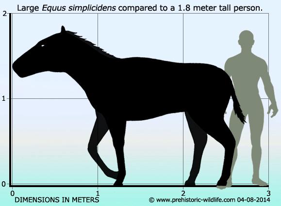 equus-simplicidens-size