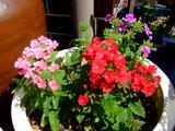 田舎の鉢に咲いた花