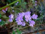 庭に咲いてた花