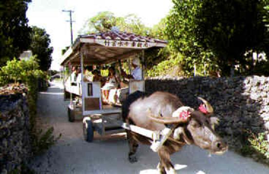 竹富島水牛車