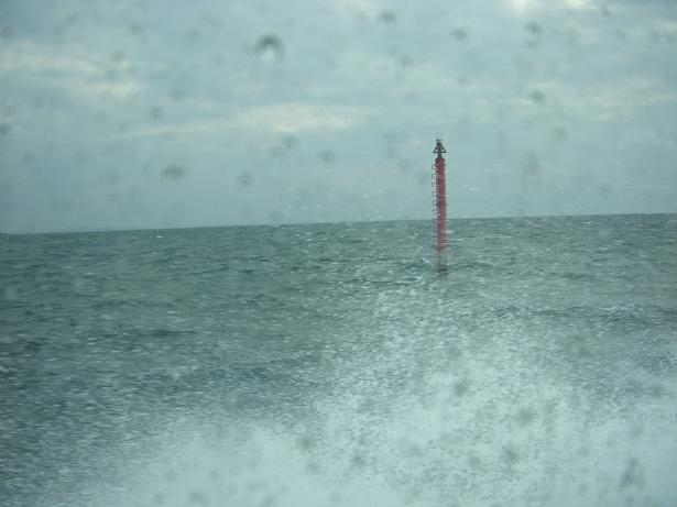 灯台もどき