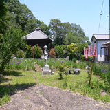 観音寺菖蒲園 002