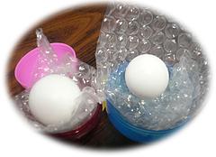 ヨウム卵3
