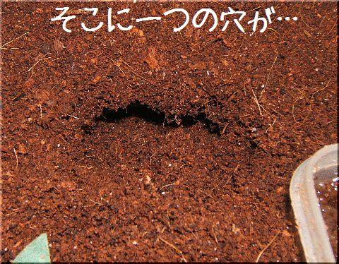 潜り屋(1)